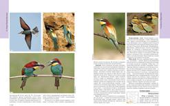 Полный определитель птиц Европейской части России (3 части)