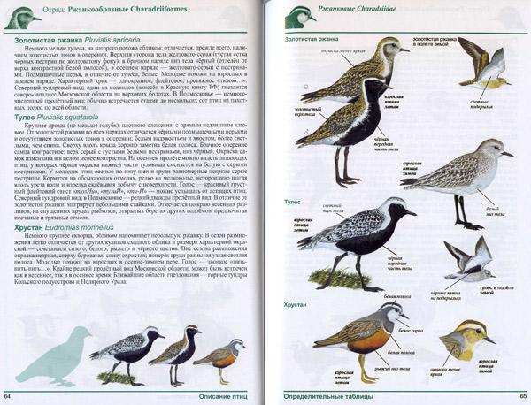 Птицы россии определитель