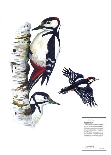 чтения и русского языка во 2-м классе по теме Зимующие птицы.