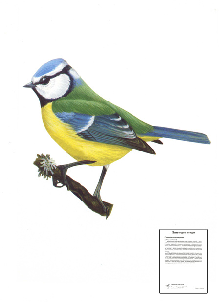 Cерия карточек 'Зимующие птицы' (10 шт.