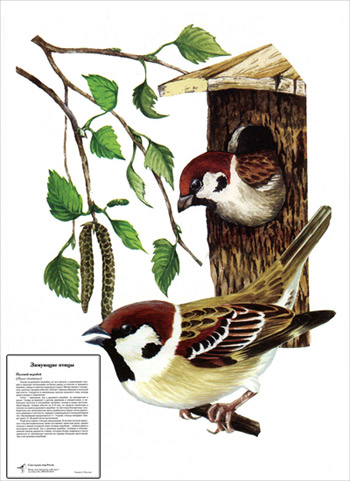 Cерия карточек зимующие птицы 10 шт