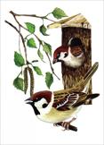 """"""",""""www.birdsmoscow.net.ru"""